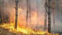 Mancano i fondi e la volontà di attuare un piano di prevenzione incendi in Sicilia (1)