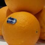 sagra della arancia 1
